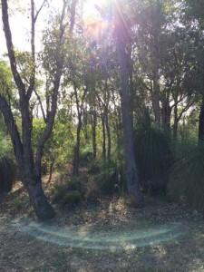 light of bush